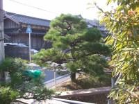 Matsu2_2